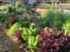 farm-vegi-plot